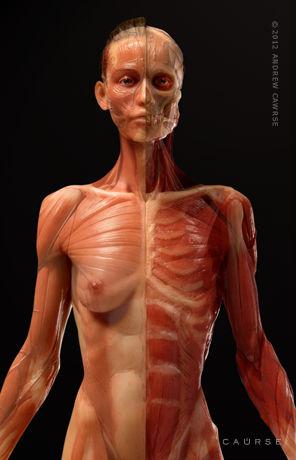 AnatomyTools.com - Instructor Bio: Andrew Cawrse