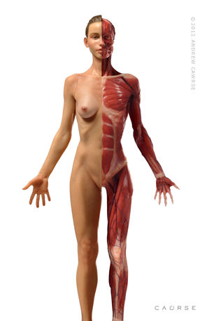 Female Body Anatomy Reference
