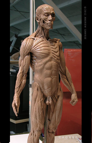 Anatomytools Instructor Bio Andrew Cawrse