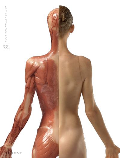 AnatomyTools.com