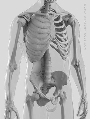 AnatomyTools - Instructor Bio: Matt Corcoran