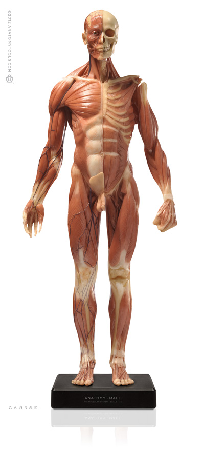 Male figure: Medical v3A