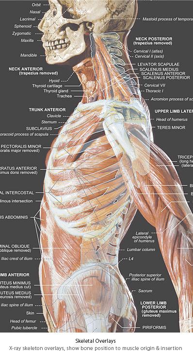 Anatomytools Com